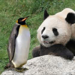 Authors Loving Google Panda Changes